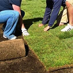 Rulo serme çim uygulaması